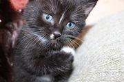 Отдам милых котят в хорошие руки.