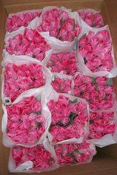 Тюльпаны оптом к 8-му марта,  от производителя!