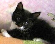 Пасхальный котенок