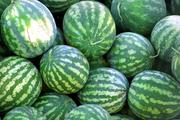 Продам арбуз оптом 20т. по 5 тысяч белорусских рублей за кг
