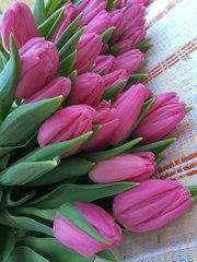Тюльпаны к 8 марта оптом,  20 сортов 8-029-650-81-40