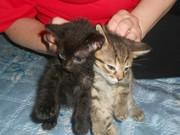 Пасхальные котята  в дар